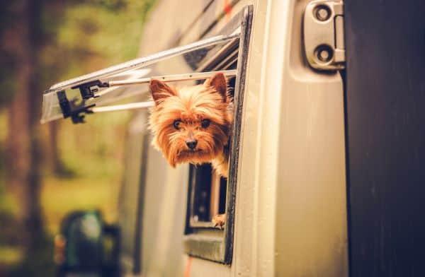 Can I Take My Dog Travelling Around Australia?