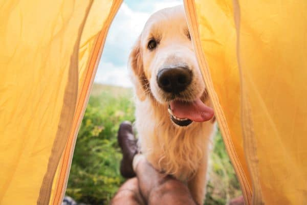 taking your dog camping