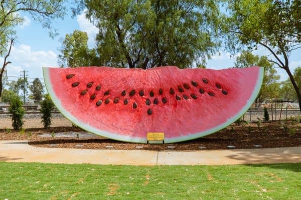 big melon in Chinchilla